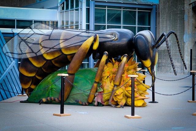 Monster Bugs at Union Station.  Photos by Michael Alvarado